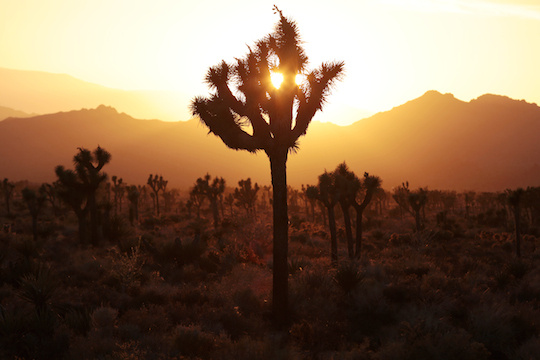 The sun sets at Joshua Tree National Park on Thursday, May 29, 2014. Photo taken at Boy Scout Trail head.