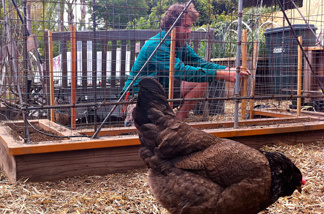Lowell Frank fights free-range chickens in Terry Moore's gardens, building wire structures to keep their beaks away from growing plants.