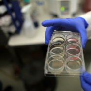 Scientists Continue Stem Cell Research While Courts Debate Ban