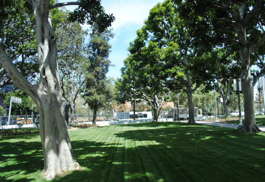 A newly restored lawn in the City Hall Park.