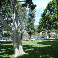 City Hall Lawn
