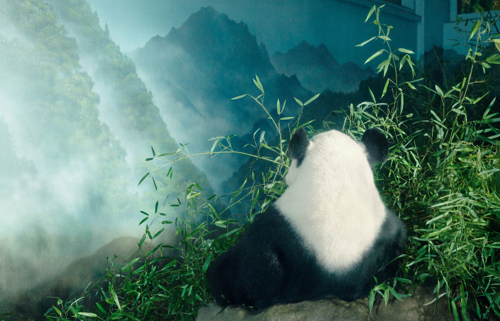 A giant panda in the Smithsonian's National Zoo.
