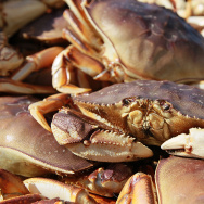 SAN FRANCISCO - NOVEMBER 17:  A Dungeness Crab sits in a bin after being offloaded from a fishing vessel on November 17, 2010 in San Francisco, California. (Photo by Justin Sullivan/Getty Images)