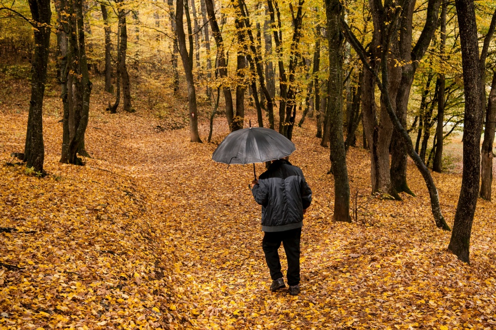 A man, holding an umbrella, walks through the park, covered of fallen yellow leaves, near Pristina, Kosovo on October 23, 2017.