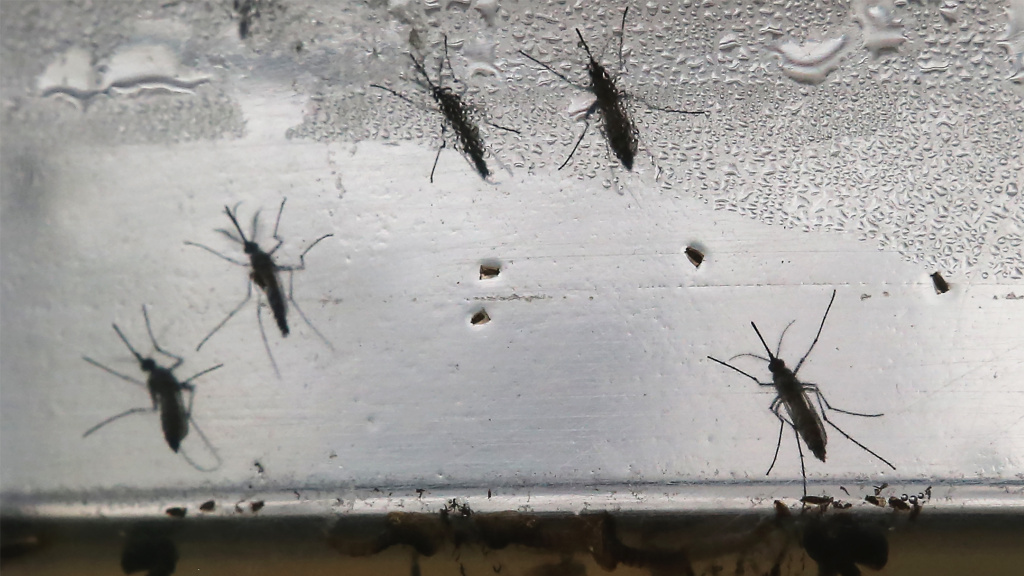 Google's science unit to target Zika carrying insects with 20m mosquitoes