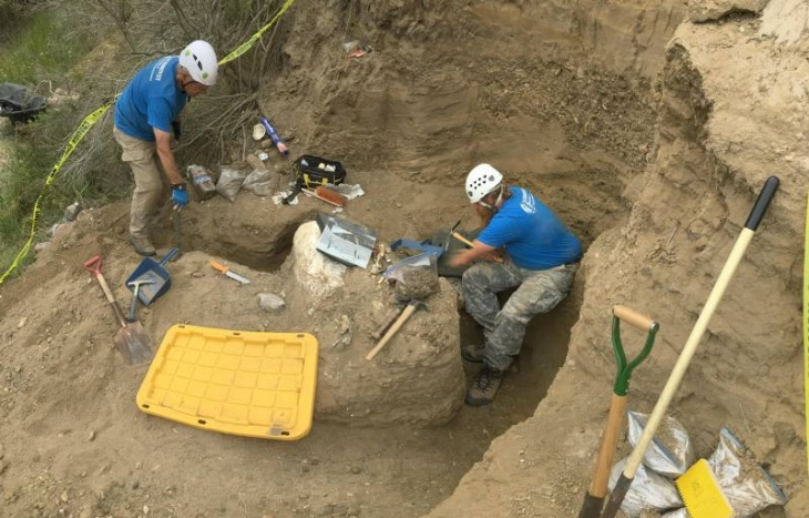 A rare mammoth fossil is excavated at Channel Islands National Park.