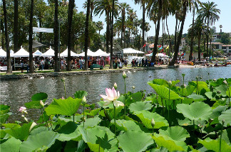 Photo from last year's Lotus Festival, when the lotus flowers were in bloom.