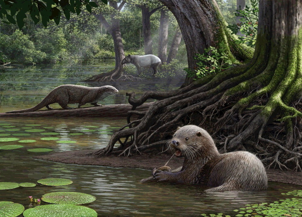 Ancient Otter Species Among Largest Ever Found