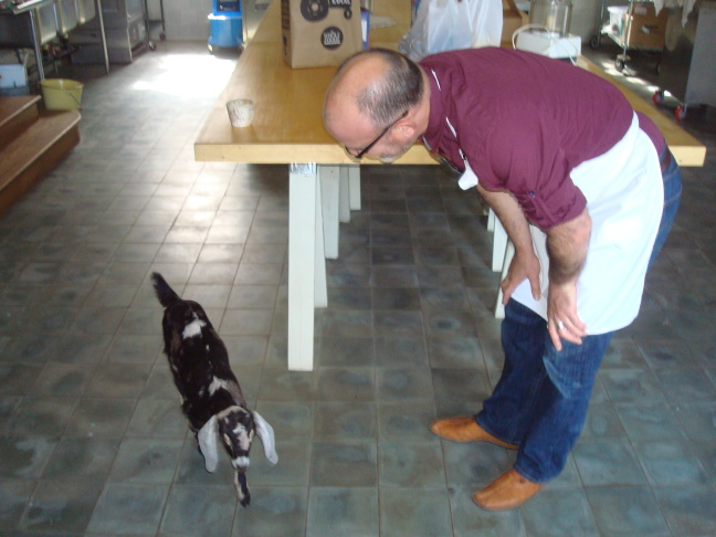 Institute of Domestic Technology Director Joseph Shuldiner talks to Poppyseed the goat, inside the Marisposa Creamery