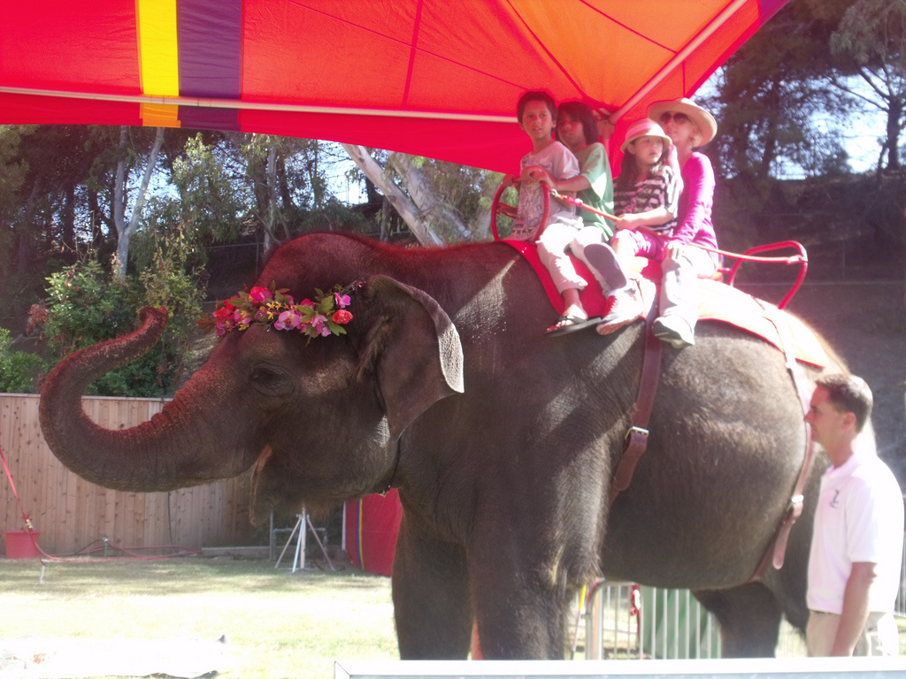 Children riding an elephant at the Orange County Fair. Taking the Orange County Fair Express bus gets attendees in the gates for just $2 —nine dollars under the usual $11 fare.