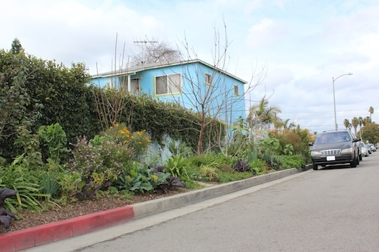 Streetside view of Ron Finley's garden