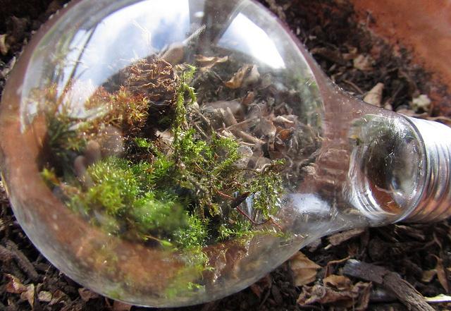 Lightbulb terrarium.