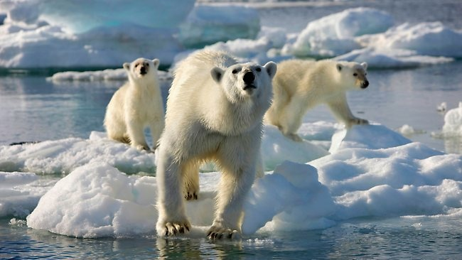 "This Sunday at 8pm, Discovery premieres its beautiful new series, ""Frozen Planet"""