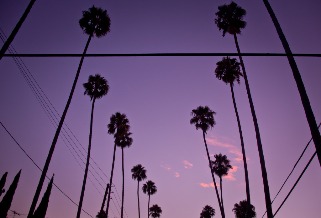 Palm trees in Los Feliz.