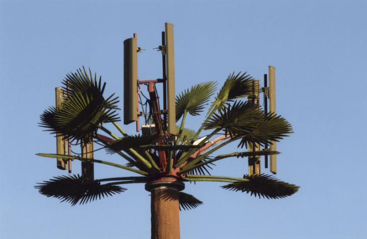 The palm tree is so obiquitous, it becomes the perfect disguise for a cell phone tower.
