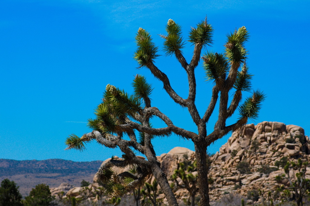 Bodies of two missing hikers found in Joshua Tree National Park