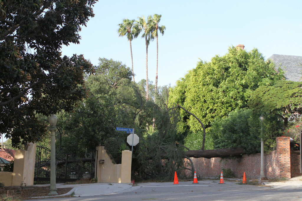 File photo: A huge tree completely blocks Cromwell Ave in Griffith Park after strong winds caused havoc on Dec. 1, 2011.