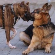 Dangerous breed: dog or man? | Events | 89.3 KPCC