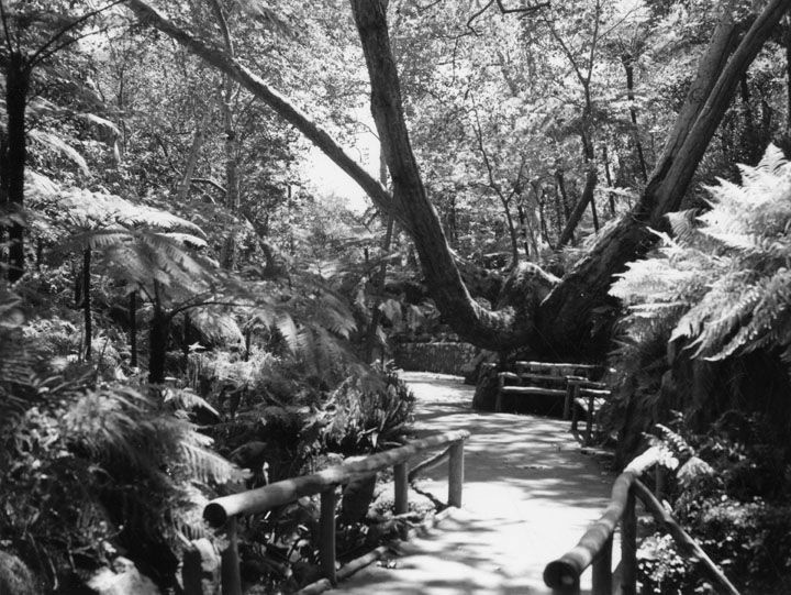 An undated photo of a path at Fern Dell garden in Griffith Park.