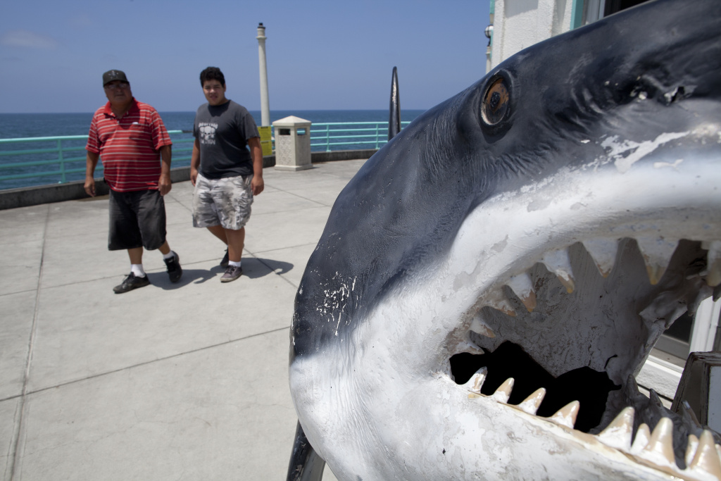 Tourists walk past a fake great white shark on display at the Manhattan Beach Pier.