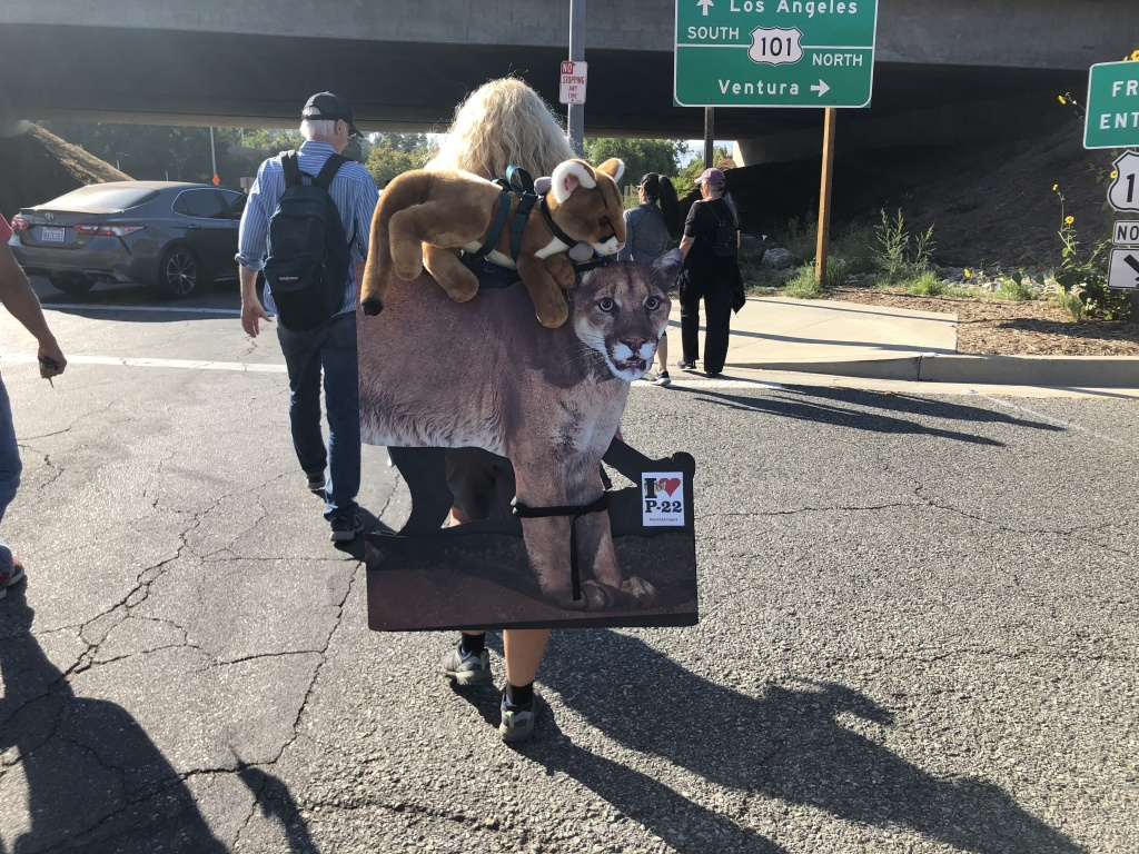 Beth Pratt starts her journey with a mountain lion tracking collar around her neck and a cardboard cutout of P-22 on her back.