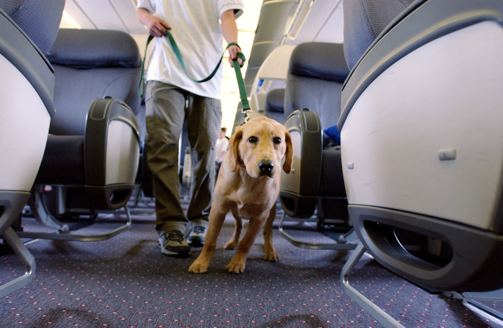 Guide dog at Newark Liberty Airport
