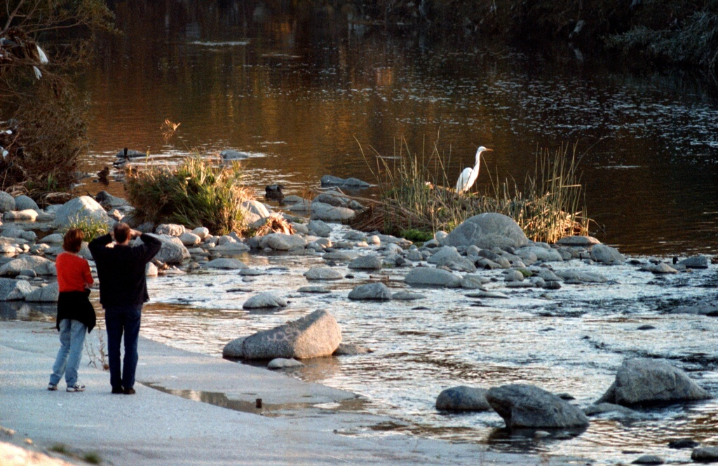 A couple watches a great egret in the Glendale Narrows portion of the Los Angeles River, November, 2000 in Los Angeles, CA.