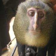 New Species 2013