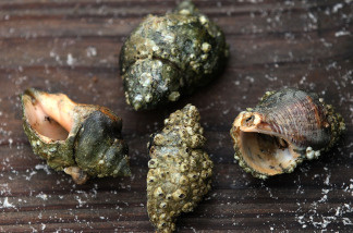 Dead hermit crabs found on a public beach on June 2, 2010 in Dauphin Island, Alabama. Oil related to the Deepwater Horizon accident began to appear yesterday on the shores of Alabama.