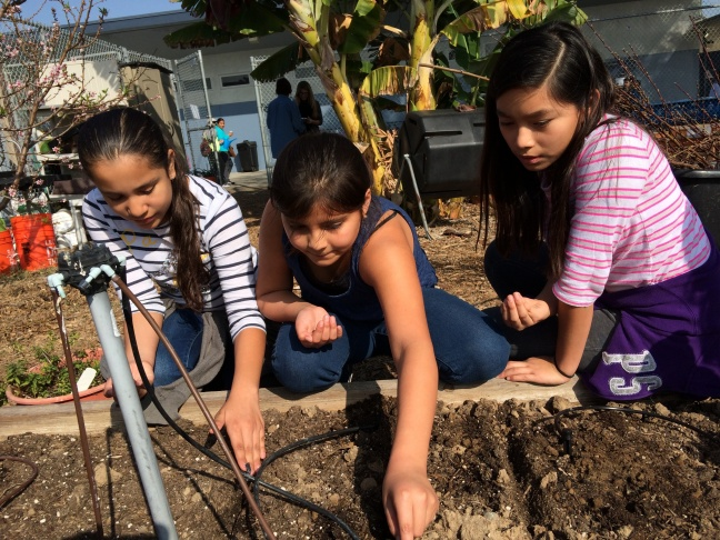 5th-grader Lisbeth Cabrera (center) loved the artichokes her class grew. She had never eaten them before, and introduced her family to artichokes after her teacher cooked them for the class.