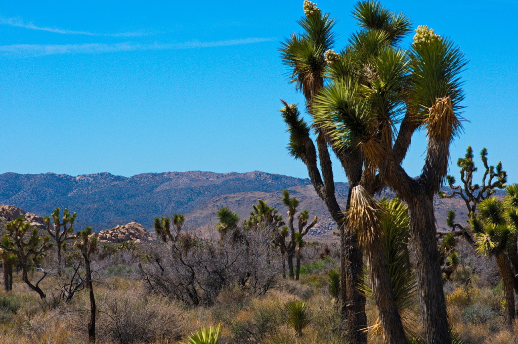 File photo; Joshua Tree National Park.