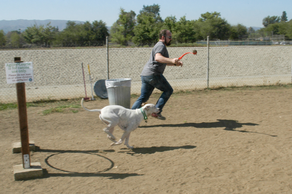 A man and his dog run the canine agility course at the Sepulveda Basin Dog Park.