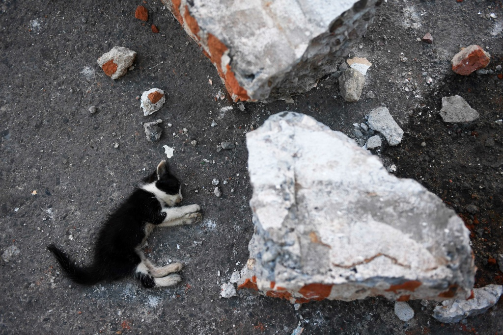 A kitten lies dead in Juchitan de Zaragoza, Oaxaca on September 9, 2017 next to debris from a building damaged by a powerful earthquake that struck Mexico's Pacific coast on September 7, 2017.