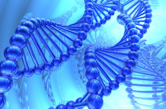 An illustration of the DNA double helix