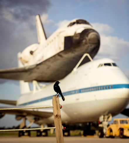 In this handout provided by NASA, a bird is seen near the space shuttle Endeavour, atop NASA's Shuttle Carrier Aircraft, or SCA, at the Shuttle Landing Facility at NASA's Kennedy Space Center on September 17, 2012 in Cape Canaveral, Florida. The SCA, a modified 747 jetliner, will fly Endeavour to Los Angeles where it will be placed on public display at the California Science Center. This is the final ferry flight scheduled in the Space Shuttle Program era.