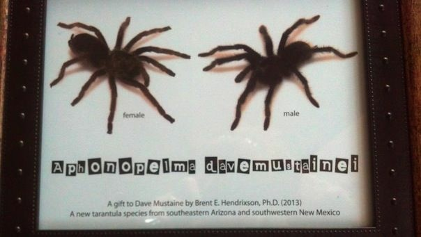 Ph.D student Brent E. Hendrixson named a new species of tarantula after Megadeth's Dave Mustaine.