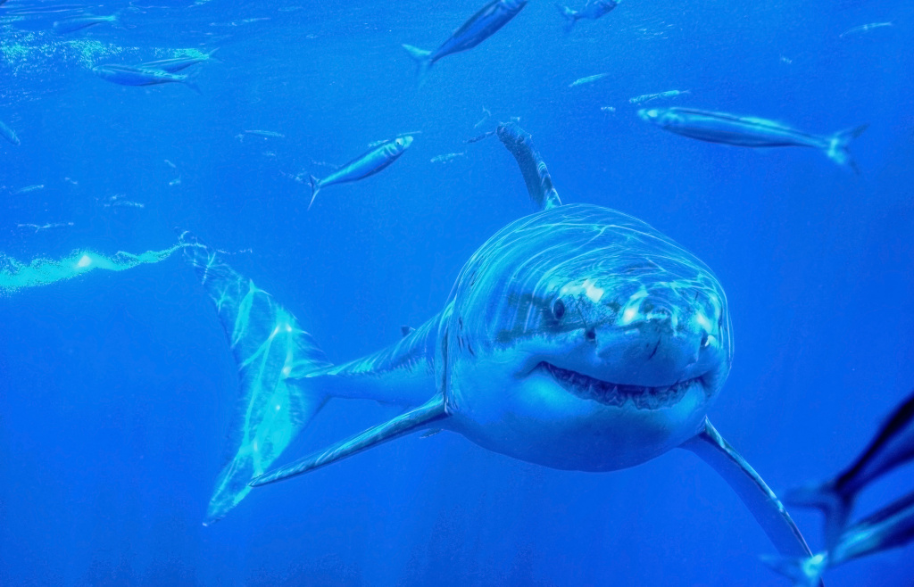FILE PHOTO: A great white shark seen off the coast of Guadalupe Island in Mexico.