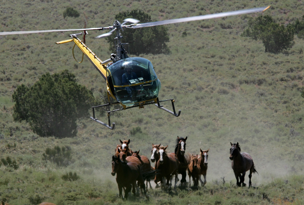 Helicopter pilot Rick Harmon of KG Livestock rounds up a group of wild horses during a gathering July 7, 2005 in Eureka, Nevada. The U.S. Bureau of Land Management wants to reduce herds in the American west, where an estimated 37,000 of the horses roam free, to 28,000 by the end of 2005.