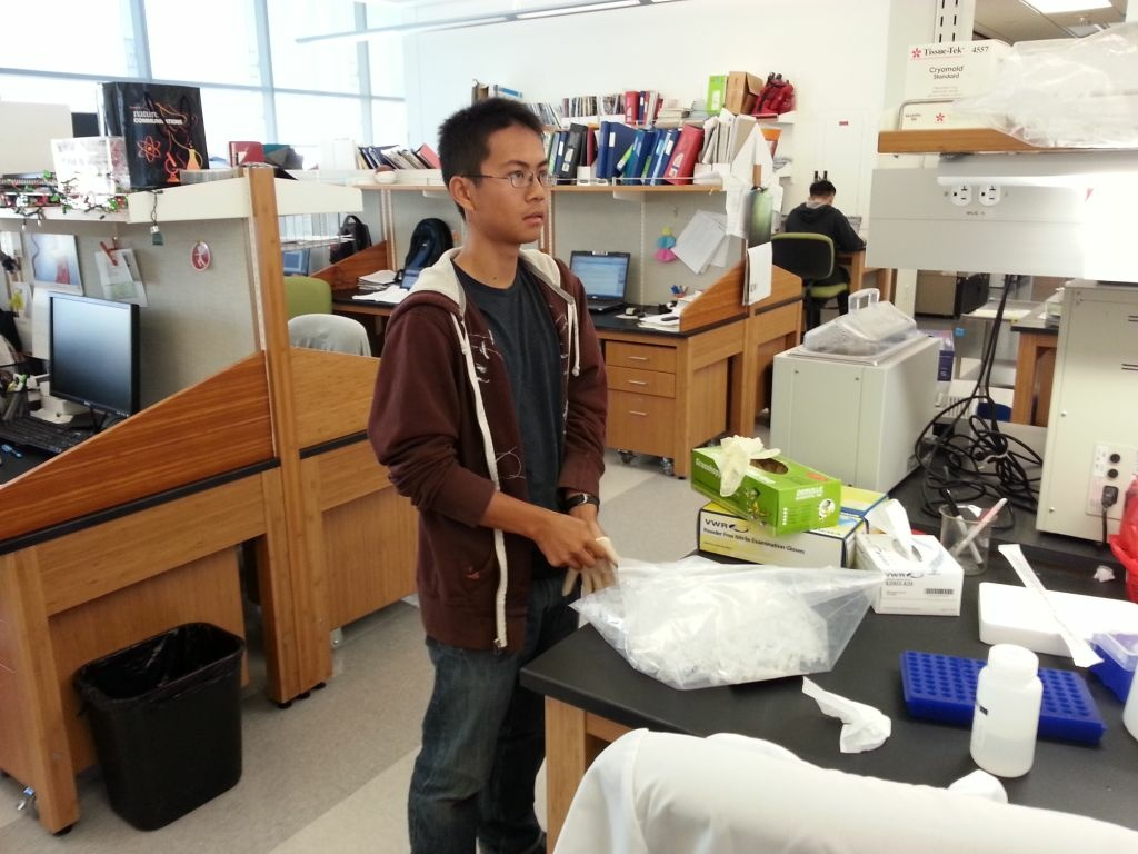 Brian Tom, 17, a Bravo Medical Magnet High School student, works in the stem cell research lab of USC's Keck School of Medicine, one of several young people gaining lab exerience this summer.