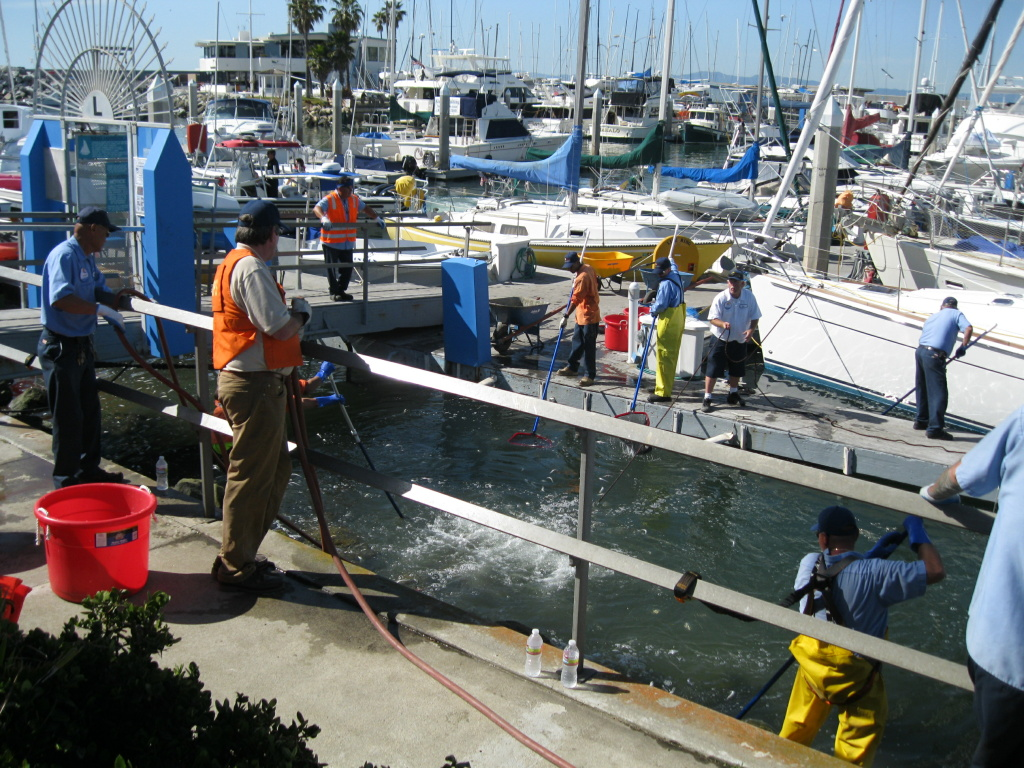 Crews use an air hose to pump water into King Harbor in Redondo Beach on March 9, 2011, to stir up dead fish, so they can scoop the fish into nets or guide them onto shore, where workers can vacuum them up.