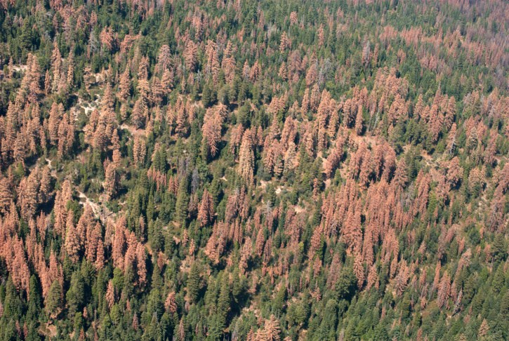 An aerial detection survey photo of dead and dying trees on the Sequoia and Sierra national forests in August 2016.