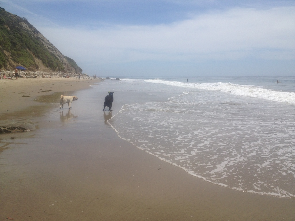 Dogs are not allowed on Los Angeles County run beaches. A task force has been formed to crack down on this and other beach violations.