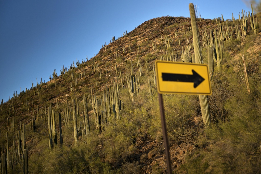 A road sign and cacti are seen on Tumamoc Hill May 13, 2015 in Tucson, Arizona.