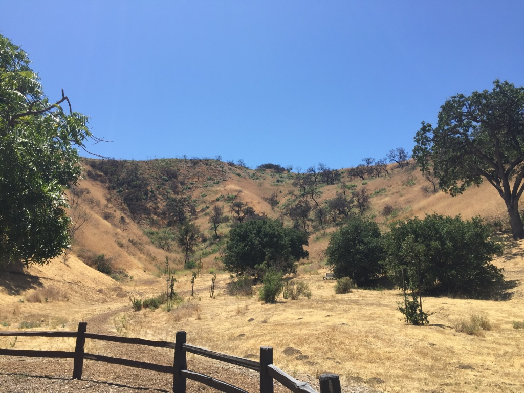 A portion of Wild Walnut Park that is having trouble recovering from the 2016 fire.