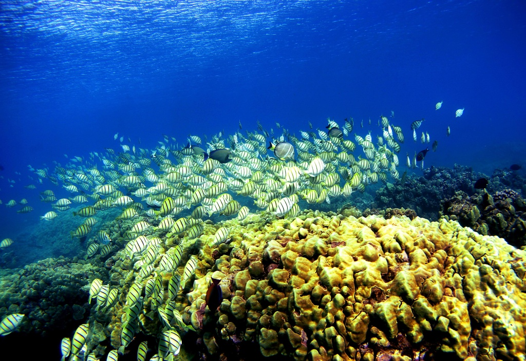 Many coral reefs are dying from water pollution (from sewage and agricultural runoff), dredging off the coast, careless collecting of coral specimens, and sedimentation.