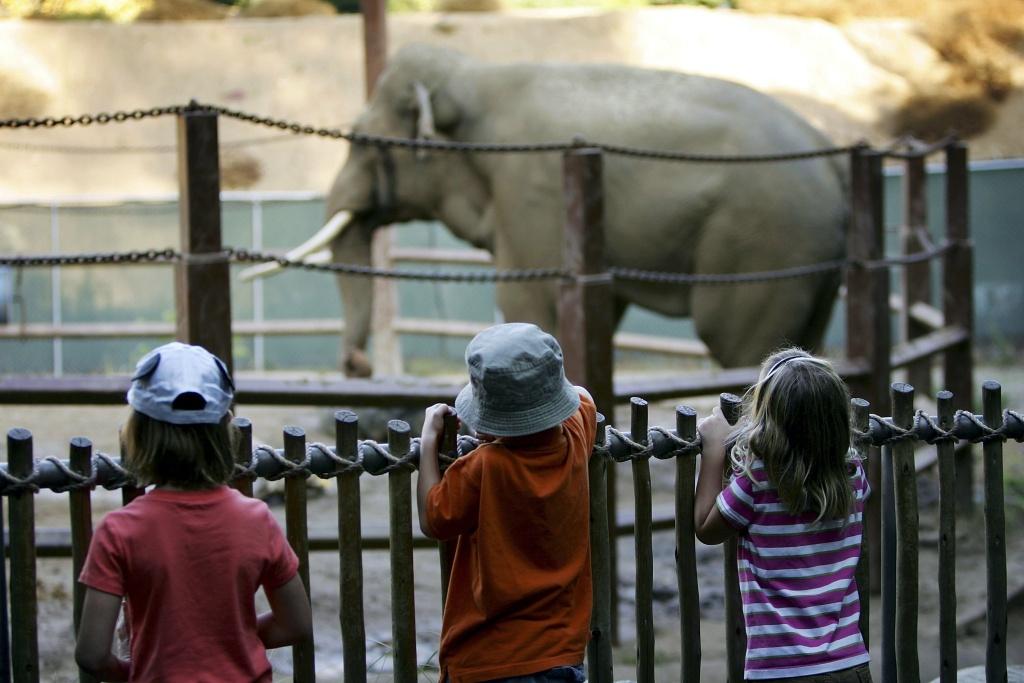 Battle brews over LA Zoo's Billy the elephant
