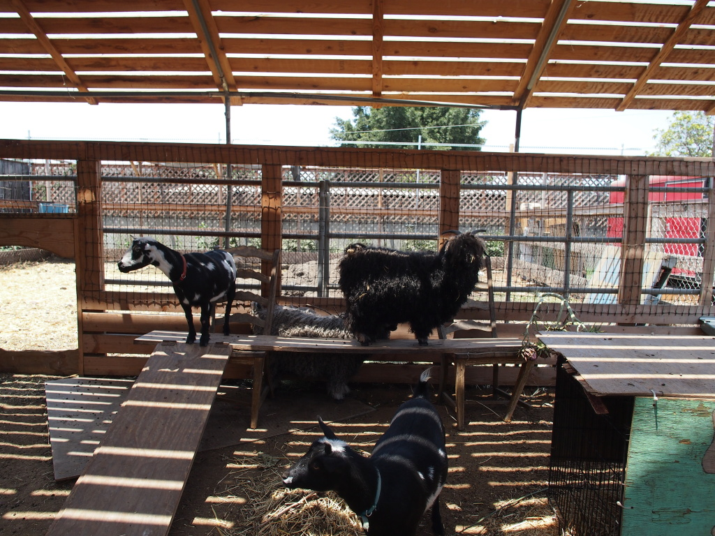 Fiber Goats and Milking Goats