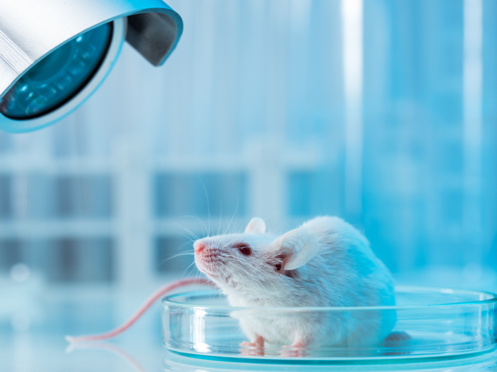 A study of mice that hear imaginary sounds could help explain human disorders like schizophrenia, which produce hallucinations.