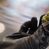 An employee holds one of several strains of medical marijuana sold at a dispensary in downtown Los Angeles on Monday afternoon, Feb. 29, 2016.