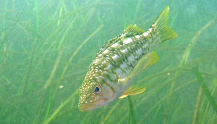 Planting native seagrass is part of an on-going effort to restore wildlife diversity and improve the ecosystem of Upper Newport Bay.